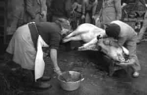 matanza-cerdo_sepia02ok